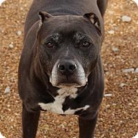 Adopt A Pet :: Anna - O Fallon, IL