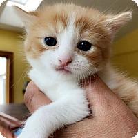 Adopt A Pet :: Watson - Austintown, OH