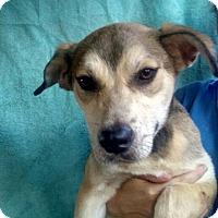 Adopt A Pet :: Genesis - Oviedo, FL