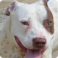 Adopt A Pet :: Larue - Allentown, NJ