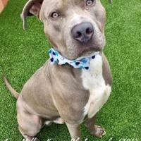 Adopt A Pet :: River - Land O'Lakes, FL