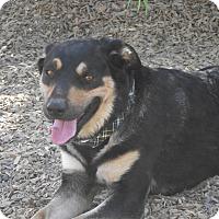 Adopt A Pet :: Emoji - Delta, CO