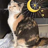 Adopt A Pet :: Moon - Hartford City, IN