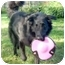 Photo 3 - Retriever (Unknown Type)/Golden Retriever Mix Dog for adoption in Cincinnati, Ohio - Ben