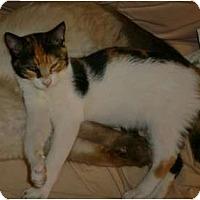 Adopt A Pet :: Sarah - lake elsinore, CA