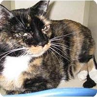 Adopt A Pet :: Brandi - Mesa, AZ