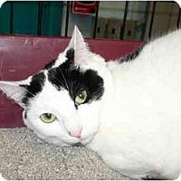 Adopt A Pet :: Jillian - Warren, MI