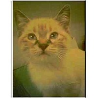 Adopt A Pet :: Marisol - Owasso, OK