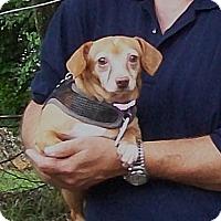Adopt A Pet :: Jimmy - West Bloomfield, MI