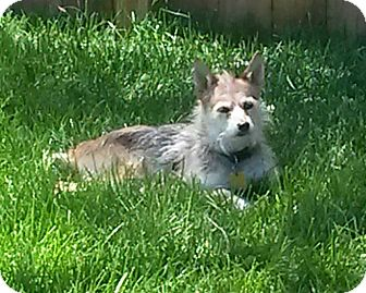 Terrier (Unknown Type, Small) Mix Dog for adoption in Rockford, Illinois - Molly