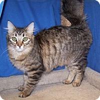 Adopt A Pet :: Justin - Colorado Springs, CO