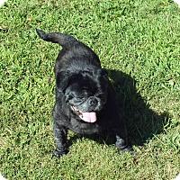Adopt A Pet :: Darth Vader - Warren, NJ