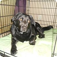 Adopt A Pet :: Django - North Jackson, OH