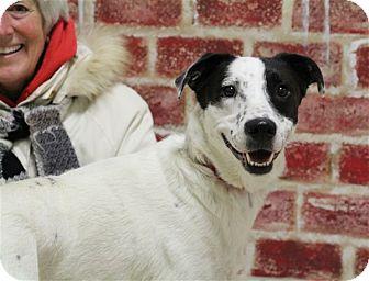 Blue Heeler Mix Dog for adoption in Elyria, Ohio - Tania