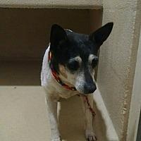 Adopt A Pet :: Kia Needs Love! - Quentin, PA