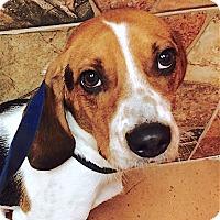 Adopt A Pet :: Wrigley - Houston, TX