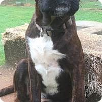 Adopt A Pet :: Irish - North Brunswick, NJ