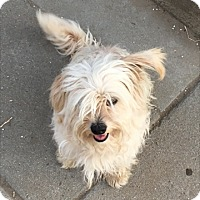 Adopt A Pet :: Doyle - Thousand Oaks, CA
