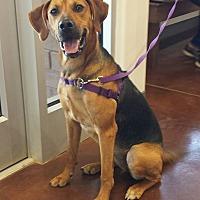 Adopt A Pet :: Kobe- New Leash on Life - Snow Hill, NC