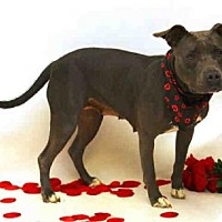 Adopt A Pet :: EDNA - Sanford, FL