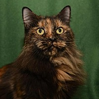 Adopt A Pet :: Izzie *F* - Sanford, FL