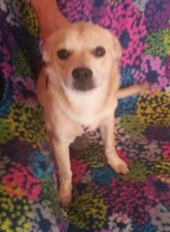 Terrier (Unknown Type, Small) Mix Dog for adoption in Amarillo, Texas - Babe