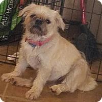 Adopt A Pet :: Sweetie - Tonopah, AZ