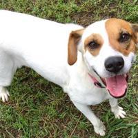 Adopt A Pet :: Bridget - West Memphis, AR