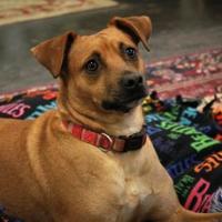 Adopt A Pet :: Penny - Waco, TX