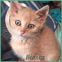 Adopt A Pet :: Bianca - Winnipeg, MB