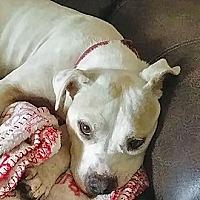 Adopt A Pet :: Lillie - Jacksonville, FL