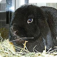 Adopt A Pet :: Mr. Hopper - Cheyenne, WY
