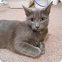 Adopt A Pet :: Maurice - Richland, MI