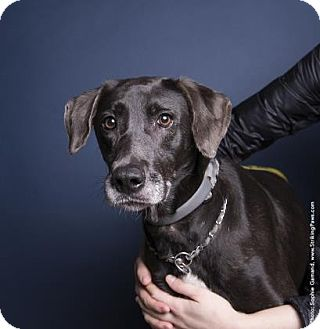 Hound (Unknown Type) Mix Dog for adoption in Brooklyn, New York - Abby