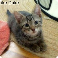 Adopt A Pet :: Luke Duke - Bentonville, AR