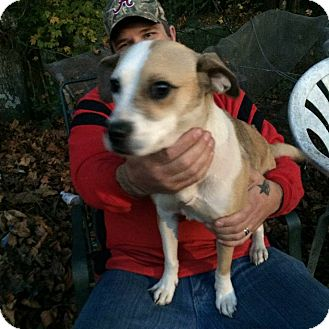 Beagle/Jack Russell Terrier Mix Dog for adoption in Shelter Island, New York - Molly