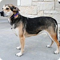 Adopt A Pet :: Missy - Weatherford, TX