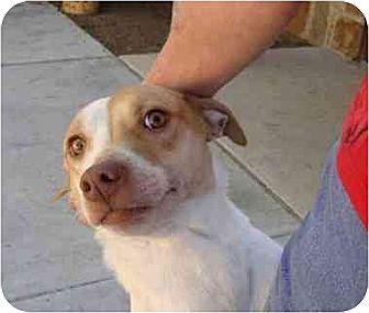 Australian Cattle Dog Mix Dog for adoption in Lavon, Texas - Elizabeth