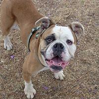 Adopt A Pet :: Gigi - Santa Ana, CA