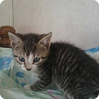 Adopt A Pet :: Nick - Wrightsville, PA
