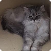 Adopt A Pet :: Eli - Gilbert, AZ