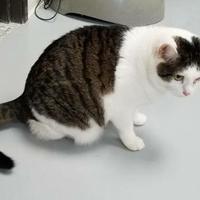 Adopt A Pet :: Star - Carroll, IA