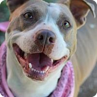 Adopt A Pet :: Mamma Bear - Philadelphia, PA