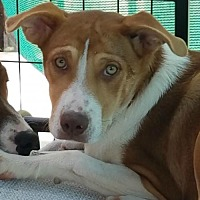 Adopt A Pet :: Chicky - Sunnyvale, CA