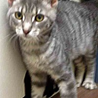 Adopt A Pet :: ADOPTED!!!   Janice - Channahon, IL