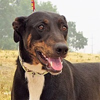 Adopt A Pet :: Maisie - Grants Pass, OR