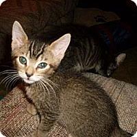 Adopt A Pet :: Oliver - Kirkwood, DE