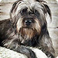 Adopt A Pet :: Maggie Mae - Wytheville, VA