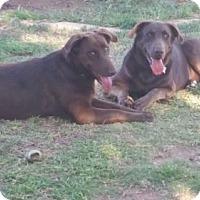 Adopt A Pet :: Trigger - Odessa, TX