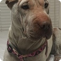 Adopt A Pet :: Honey - Gainesville, FL